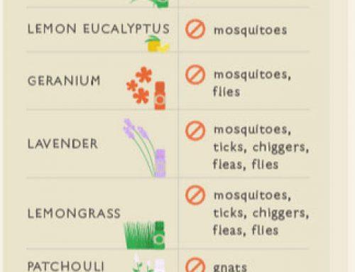 DIY Baby Food is Simple but DIY Bug & Pest Control?  DIY Bug and Pest Control is simple too!